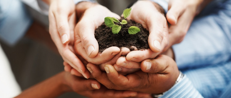 photodune-202925-business-development-hands-holding-seedling-in-a-group-s